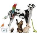 Útiles para Mascotas